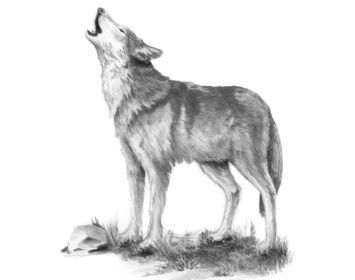 R&L sketching made easy small Howl