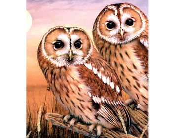 R&L Paint by Number Jr. Tawny Owls