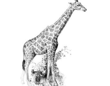 R&L Sketching made easy mini Giraffe