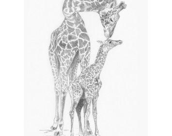 Sketching made easy giraffe