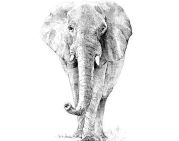 R&L sketching made easy Elephant