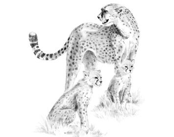 Sketching made easy cheetah