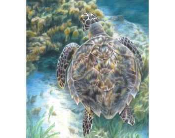 R&L  colour pencil by numbers Sea Turtle