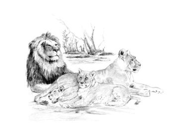 Lions Large Sketching Made Easy